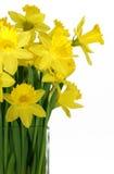 ваза daffodils стеклянная квадратная Стоковое Изображение