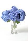 ваза hydrangeas стоковая фотография rf
