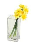 ваза narcissuses квадратная Стоковое фото RF