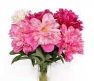 ваза peonies пука Стоковое Изображение