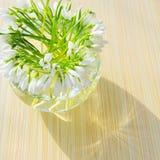 ваза snowdrops стоковое изображение