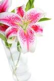 ваза stargazer лилий Стоковое Фото
