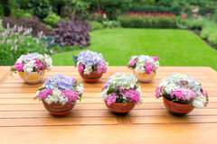 Вазы с зацветая цветками на таблице teak Стоковая Фотография