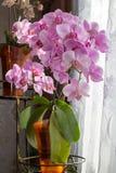 Вазы цветка орхидеи Стоковое фото RF