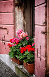 Вазы цветков на мраморной верхней части старого розового окна стоковые изображения rf