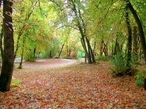 Вакантный парк в Юте в падении Стоковое Фото