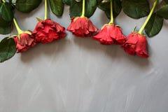 Валентайн карточки s Красные розы на серой предпосылке скопируйте космос Взгляд сверху Стоковое Изображение RF