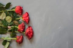 Валентайн карточки s Красные розы на серой предпосылке скопируйте космос Взгляд сверху Стоковая Фотография RF