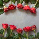 Валентайн карточки s Красные розы на серой предпосылке скопируйте космос Взгляд сверху Стоковое фото RF