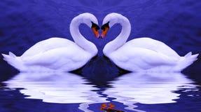 Валентайн лебедей s Стоковая Фотография RF