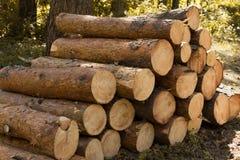 Валить деревья в лесе Стоковые Фото