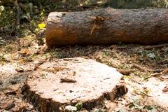 Валить деревья в лесе Стоковые Изображения RF