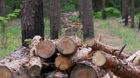Валить журналы падая на стволы дерева в лесе сток-видео
