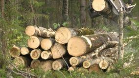 Валка леса летом видеоматериал