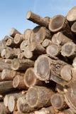 Валка дерева Стоковые Фотографии RF