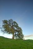 валы весны дуба стоковые изображения rf