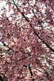 валы весны цветков Стоковое фото RF