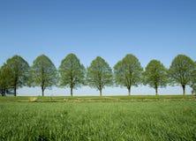 валы весны Стоковая Фотография