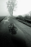валы дороги подкладки березы Стоковое фото RF