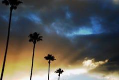 валы захода солнца ладони Стоковые Изображения