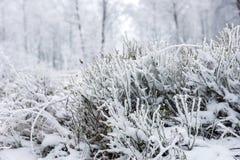 Валы зимы покрытые с hoarfrost стоковая фотография rf