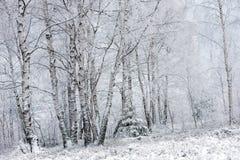 Валы зимы покрытые с hoarfrost стоковые фото