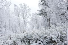 Валы зимы покрытые с hoarfrost стоковое изображение rf