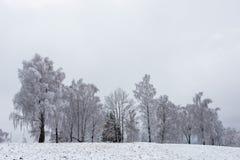 Валы зимы покрытые с hoarfrost стоковые изображения