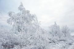 Валы зимы покрытые с hoarfrost стоковые фотографии rf