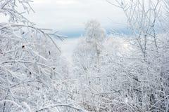 Валы зимы покрытые с hoarfrost стоковое фото