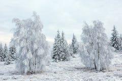 Валы зимы покрытые с hoarfrost стоковое изображение