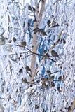 Валы зимы птицы Стоковое Изображение RF