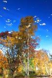 валы картины природы Стоковые Фотографии RF