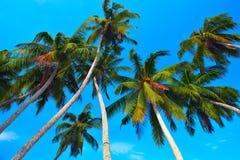 валы кокоса Стоковые Фото