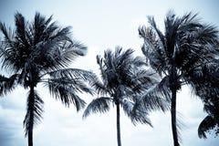 валы кокоса Стоковое Фото