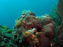 валы кораллового рифа рождества Стоковая Фотография RF