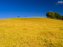 валы лета холма Стоковое фото RF