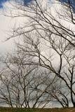 валы лета Стоковое Фото