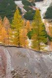 Валы лиственницы на горных склонах стоковое фото