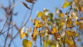 валы листьев осени движение медленное акции видеоматериалы
