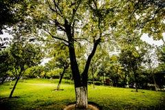 валы лужка листьев берез осени померанцовые Стоковое Изображение
