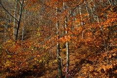 валы лужка листьев берез осени померанцовые Стоковое Фото