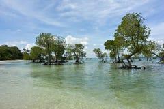 валы мангровы Стоковое Фото