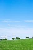 валы неба портрета травы Стоковые Изображения RF