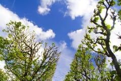 валы неба Стоковое фото RF