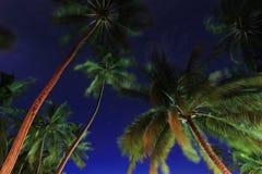 валы ночи Мальдивов кокоса Стоковое Изображение RF