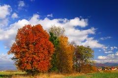 валы осени Стоковые Фото