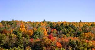 валы осени Стоковое Изображение RF