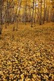 валы осени Стоковые Фотографии RF