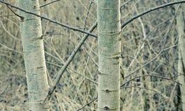 валы осени Стоковое Изображение
